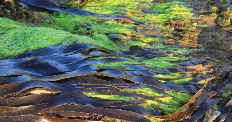 Algele marine, curăță şi întineresc pielea – gel de duș BIO