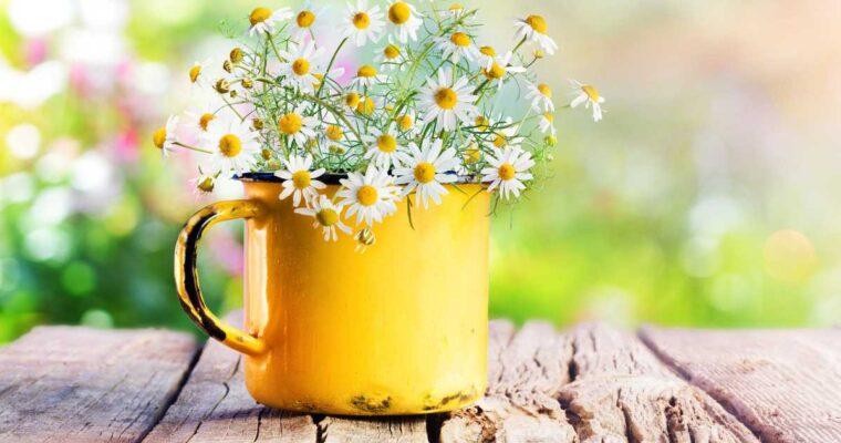 De primăvară – între flori și cumpărături