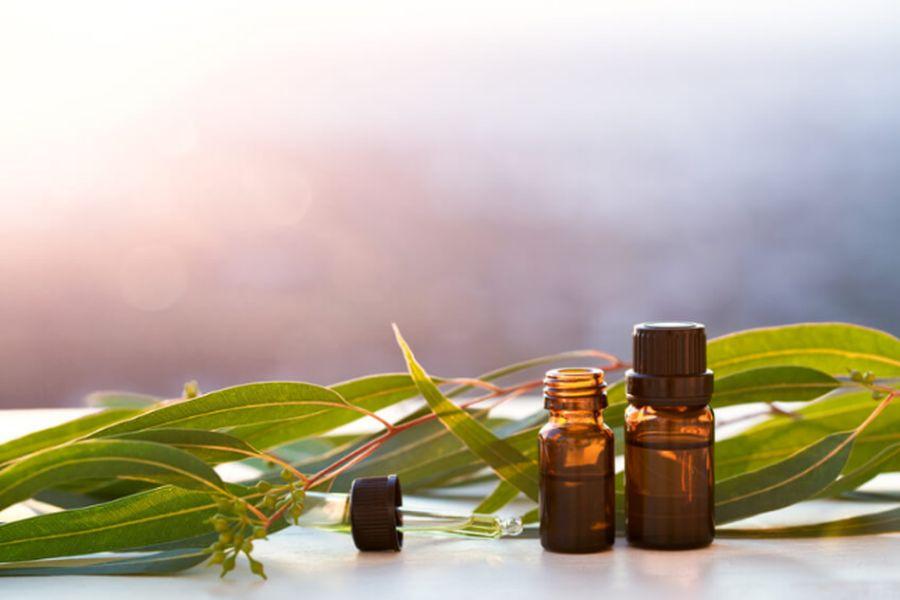 Tratează problemele respiratorii cu uleiul esenţial de eucalipt