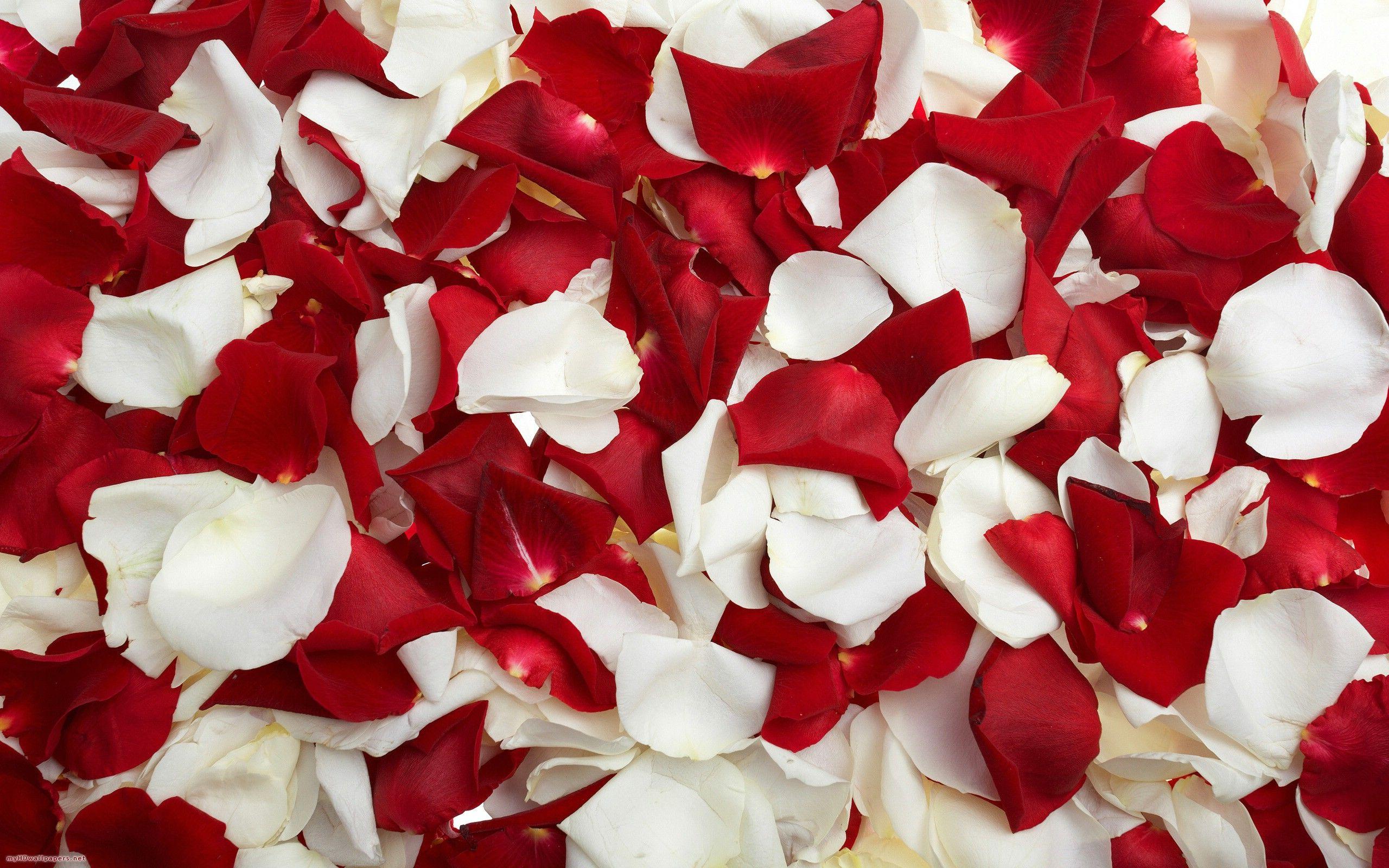 Beneficiile petalelor de trandafir asupra pielii şi psihicului